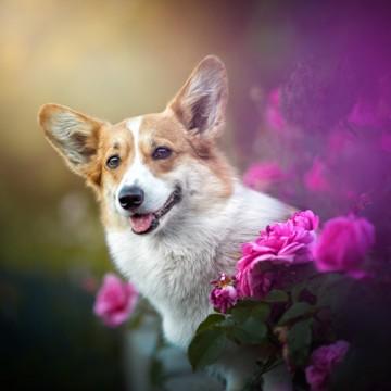 Міжнародний день собак