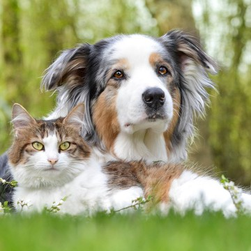 Авітаміноз для значної кількості тварин є актуальною проблемою