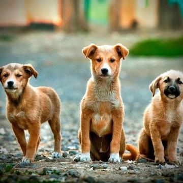 День безпородної собаки