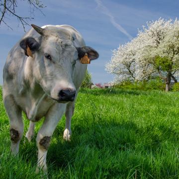 Підтримка функціонування печінки тварин